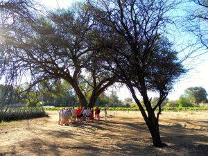 033_kk_Besuchergruppe unter Kameldornbaum